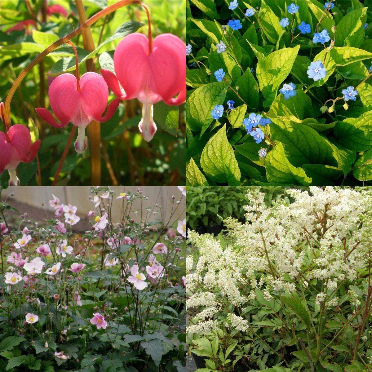 Beliebt Bevorzugt 10 Stk. Pflanzen für den Schatten Stauden-Paket winterhart | eBay #LB_01