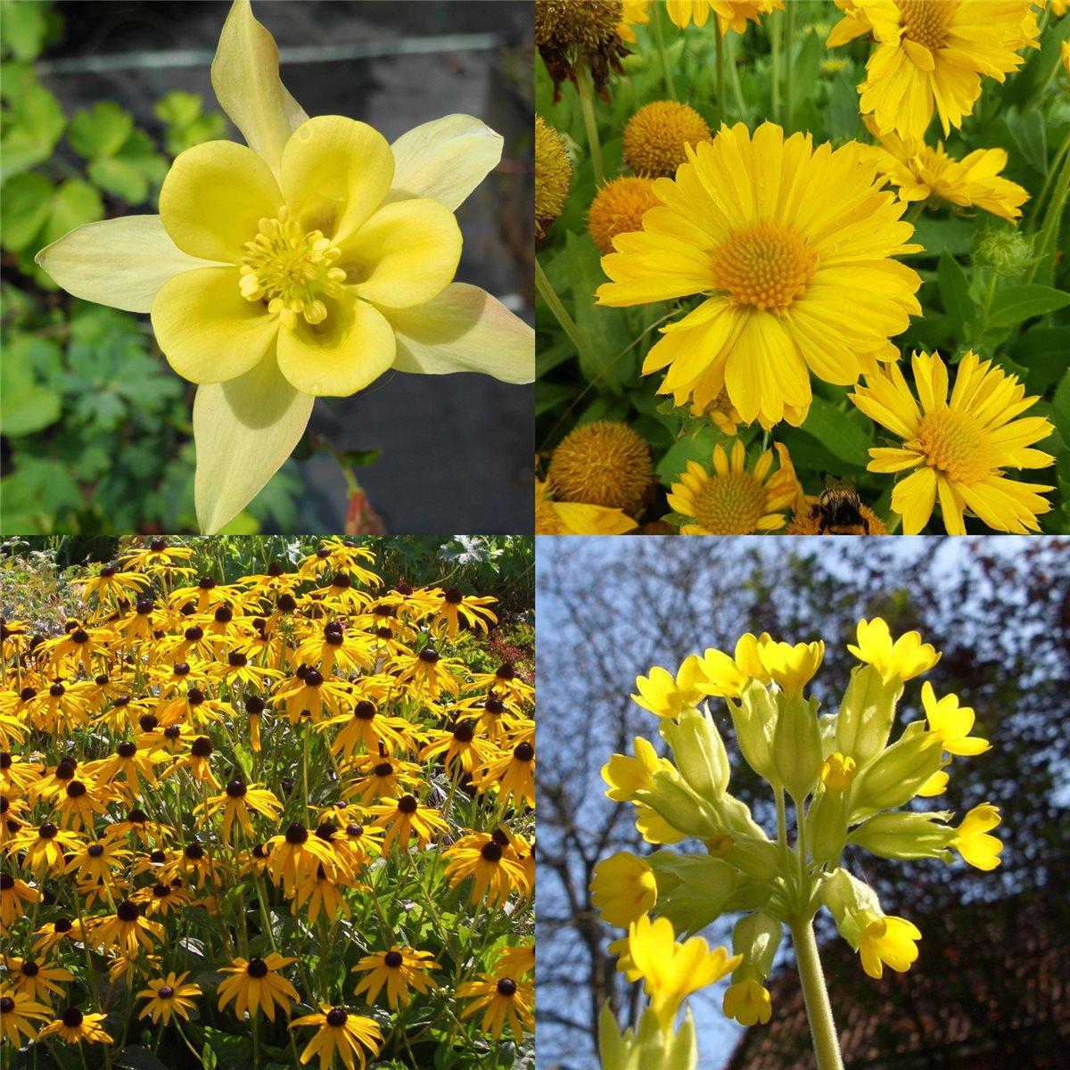 14 stk winterfeste pflanzen f r den 39 garten in gelb 39 ebay - Topfpflanzen garten ...