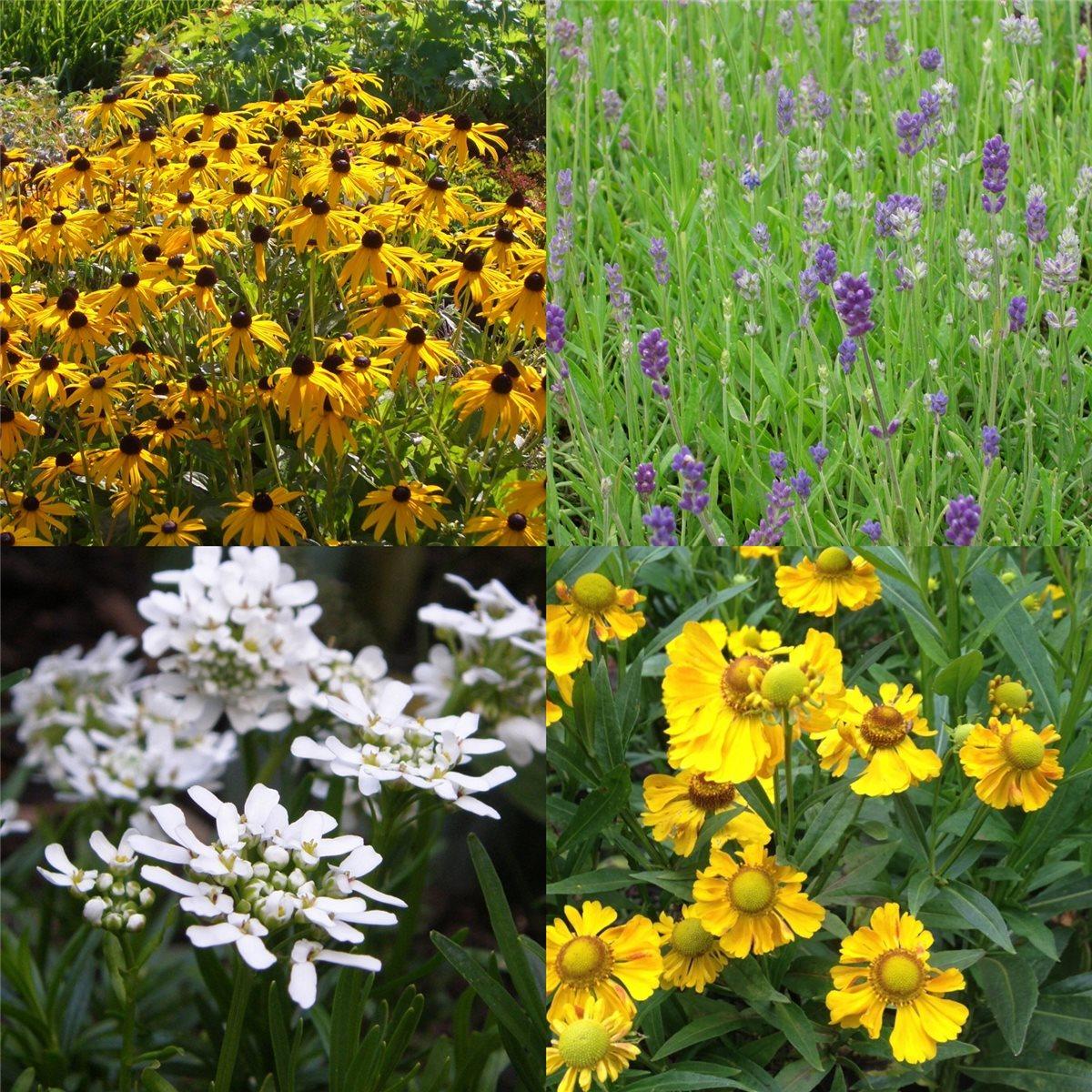 54 stauden pflanzen mix sonnen beet blau weiss gelb mit pflanzplan ebay. Black Bedroom Furniture Sets. Home Design Ideas